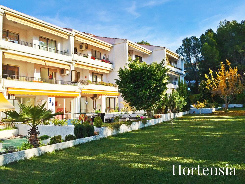 hortensia-10